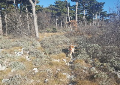 Croazia Beccacce - ambienti misti
