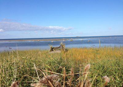 Estonia Anatre appostamento anatre