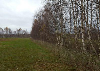 Estonia Beccacce ambienti betulle aperte