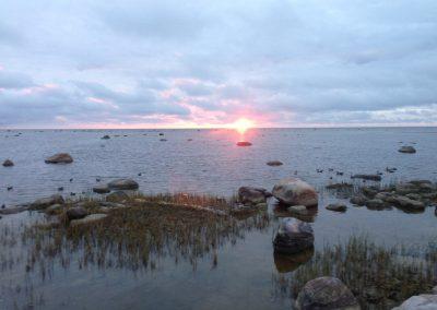 Estonia Oche alba agli acquatici