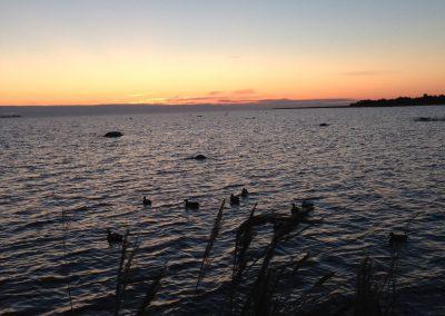 Estonia Oche - appostamento acquatici