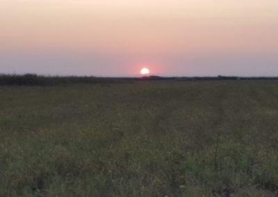 Romania Quaglie - alba
