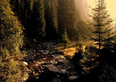 Romania Ruscello tra i boschi nei Carpazi Orientali